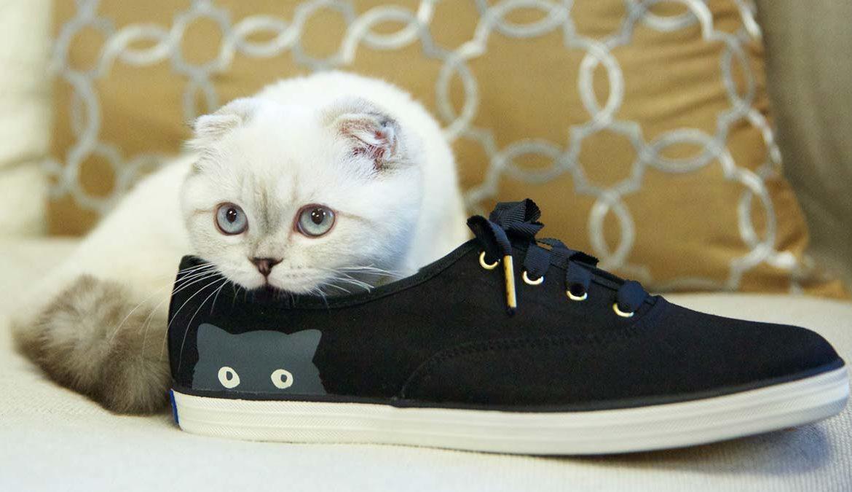 Запах кошачьей мочи, как избавиться от запаха кошачьей мочи, избавиться от кошачьего запаха, как вывести кошачий запах, убрать кошачий запах, вывести запах кошачьей мочи, кошачья моча на диване, удалить запах кошачьей мочи, средство от запаха кошачьей мочи, запах кошачьей мочи в квартире, вывести кошачью мочу с дивана